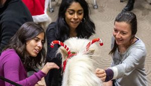Three students pet a miniature pony during finals